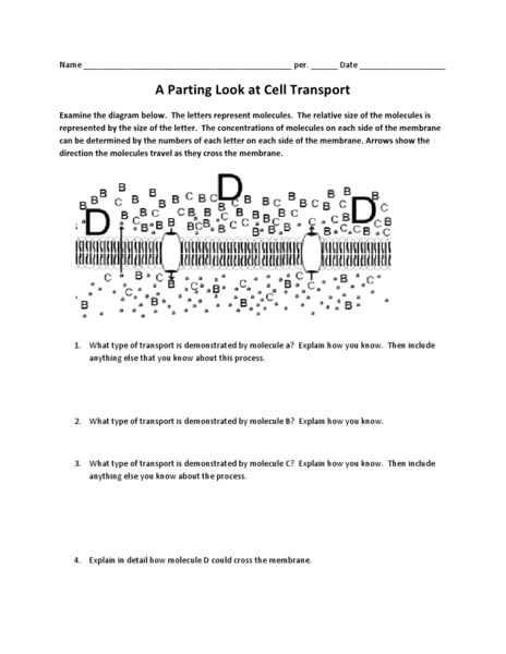 Cellular Transport Worksheet Answer Key Photos