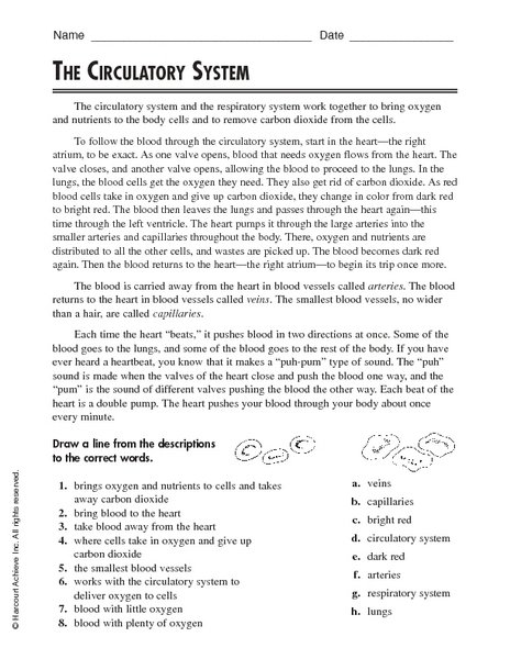 Circulatory System 5th Grade Worksheets