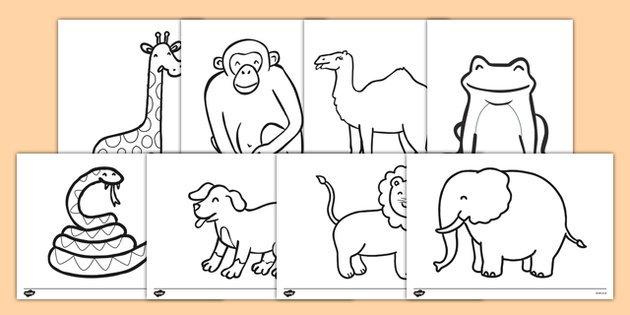 Dear Zoo Colouring Sheets Pinteres Of Animals Printables