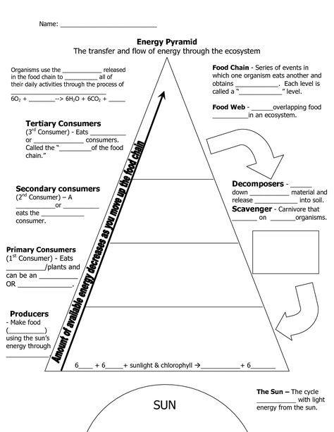 Ecological Pyramid Worksheet Energy Pyramid Worksheets Middle