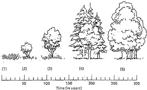 Ecological Succession Worksheet Answers Free Worksheets Library