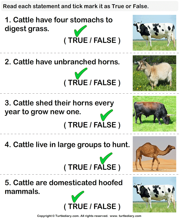 Facts About Cattle Worksheet
