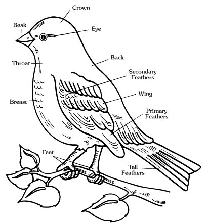 Free  Worksheets Of  Animals !!!!  Body Parts Of  Birds