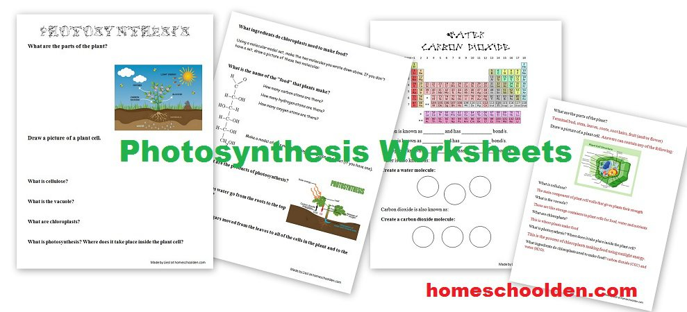 Free Photosynthesis Worksheets