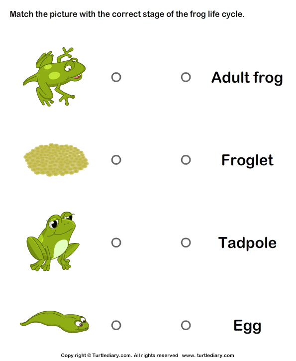 Life Cycle Of A Frog Pictures Worksheet