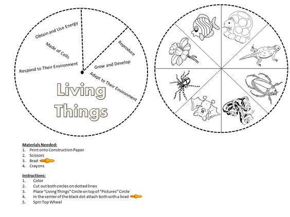 Living Things And Their Environment Worksheets Free Worksheets