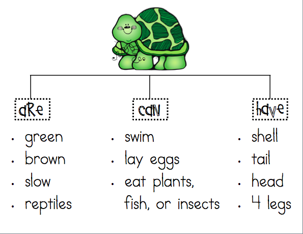 Mrs  Ricca's Kindergarten  Nonfiction Writing {turtles}