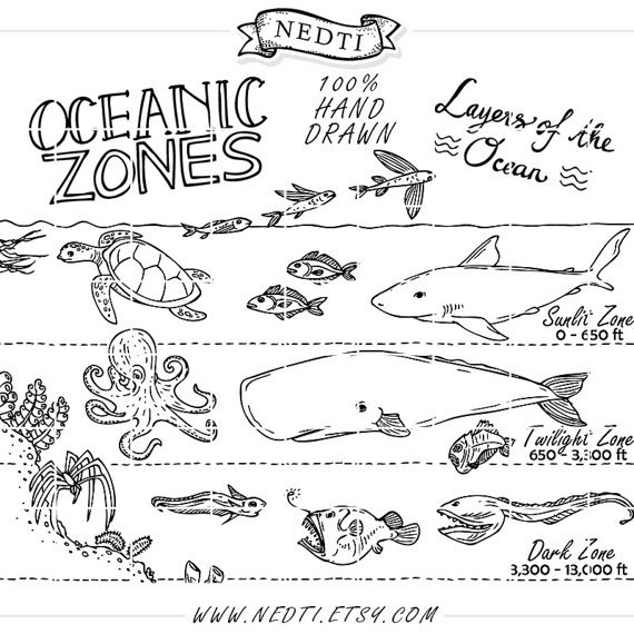 Oceanic Zones Educational Clipart Earth Science Hand Drawn