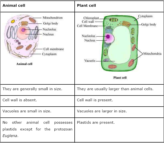 Printables  Cell Structure And Function Worksheet Answers