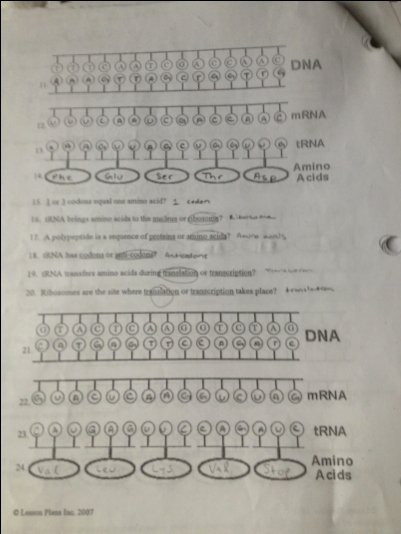 Protein Synthesis Worksheet Key Best Of All Worksheets Chapter 12