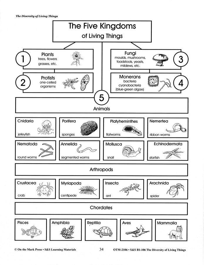 Stunning Worksheet For Kids 7th Grade Worksheets Best Images Of