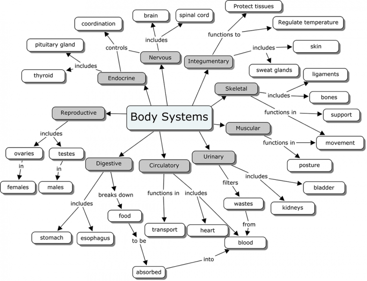 Systems Of The Body Worksheet Free Worksheets Library