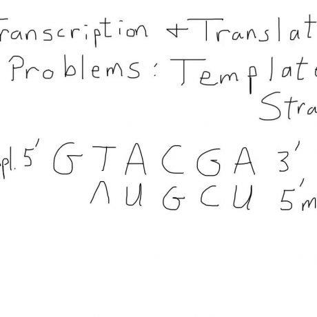 Transcription And Translation Worksheet Free Worksheets Library