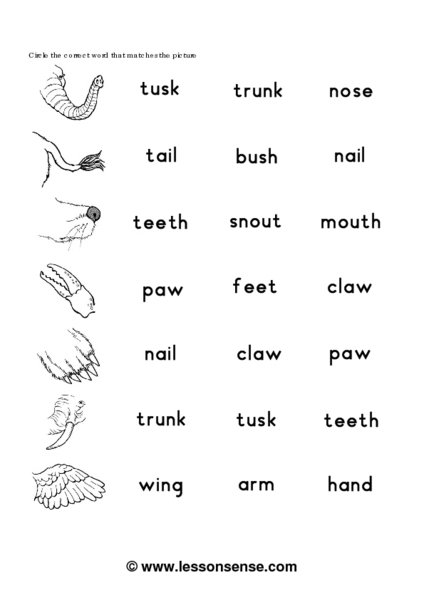 Worksheets Animals Body Parts For Kids Teachers