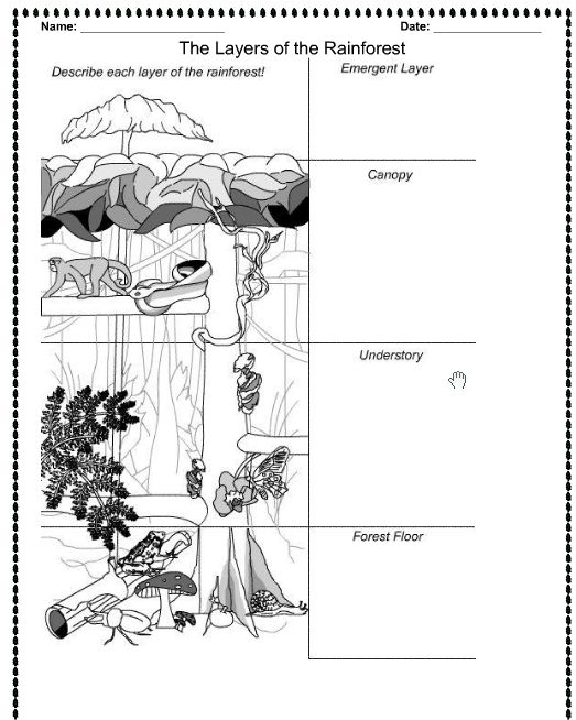 Amazon Rainforest Worksheets Worksheets For All