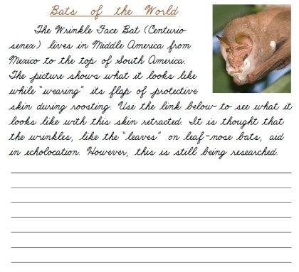Bats Of The World Cursive – Printable Cursive & Manuscript