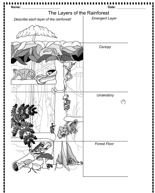 Best Photos Of Amazon Rainforest Printable Worksheets