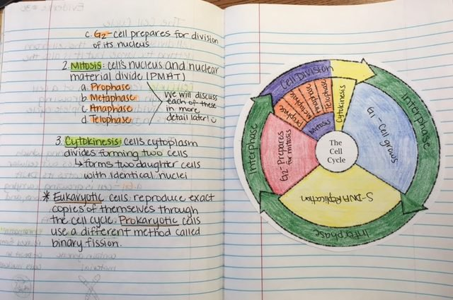 Best The Cell Cycle Coloring Worksheet Pictures