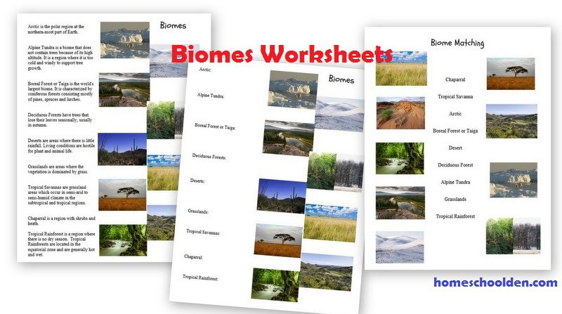 Biology Unit On The Biosphere  Biomes, Ecosystems, Habitats