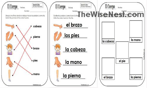 Body Parts In Spanish Worksheet Worksheets For All