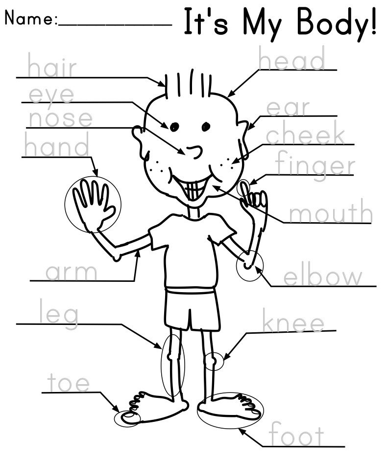 Body Parts Worksheet Kindergarten Parts Of The Body The