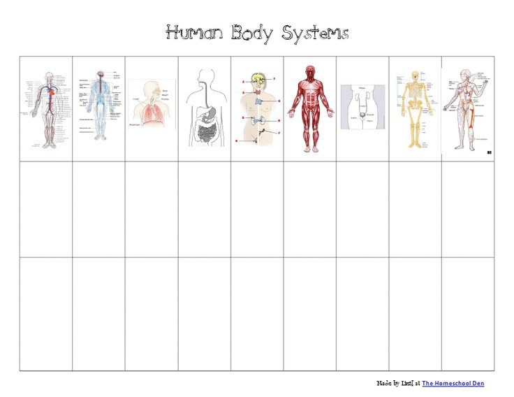 Body Systems Foldable