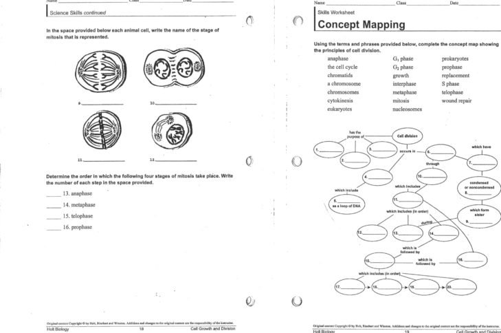 Cell Division Worksheets Middle School
