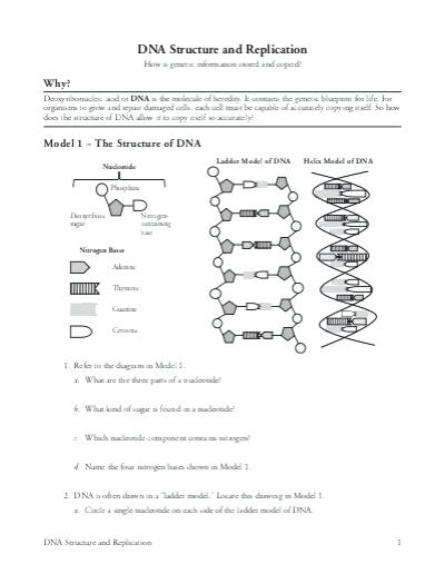 Chapter 12 Dna Structure And Replication Worksheet Answers