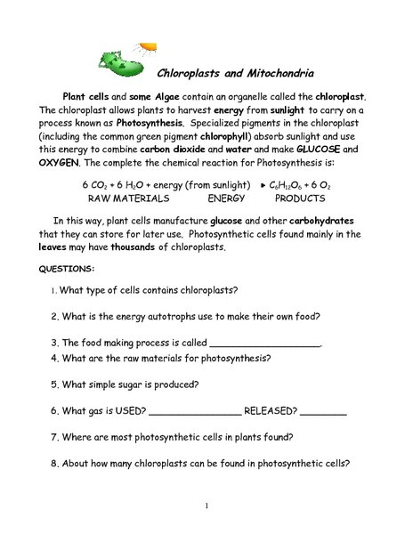 Chloroplast And Photosynthesis Coloring Worksheet