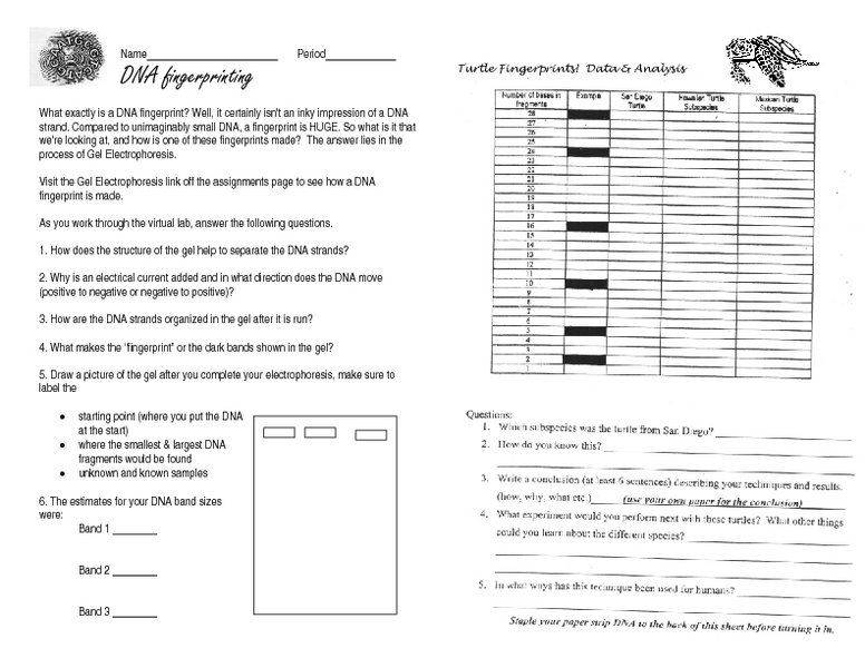 Dna Fingerprint Worksheet Worksheets For All