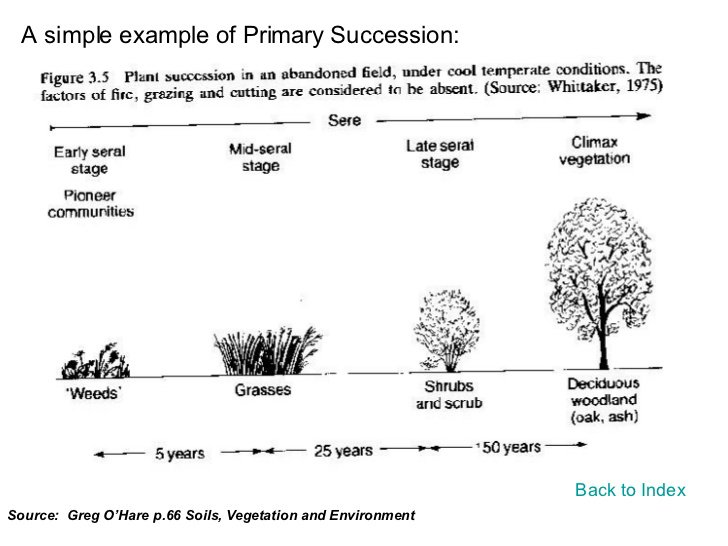 Ecological Succession Worksheets Worksheets For All