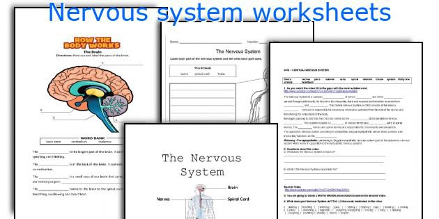English Teaching Worksheets  Nervous System