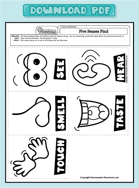 Five Senses Worksheets Preschool Worksheets For All