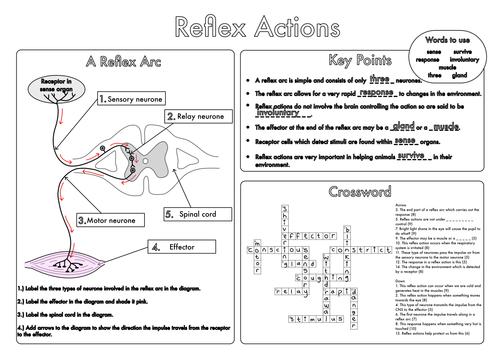 Gcse Worksheets On The Nervous System