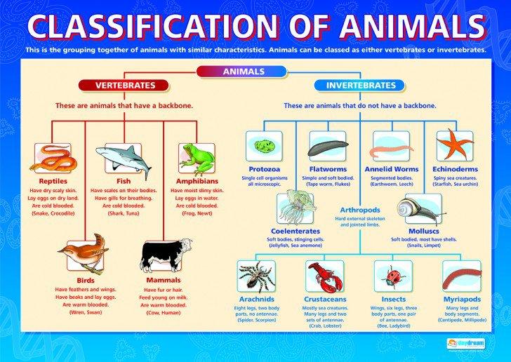 Invertebrates , 5 Types Of Invertebrates   Classification Of