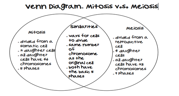 Mitosis Vs  Meiosis Venn Diagram Comparing And Contrasting Mitosis