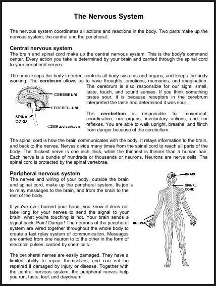 Nervous System Worksheets Worksheets For All