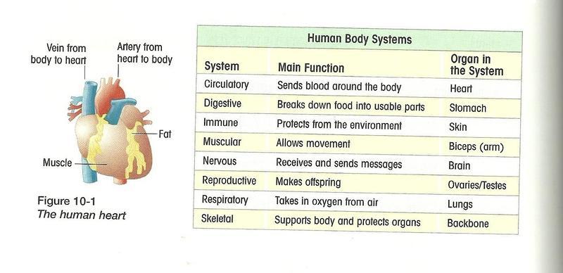 Osmosis Jones Human Body System Analogies