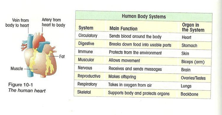 Osmosis Jones Worksheet Answers Osmosis Jones Human Body System