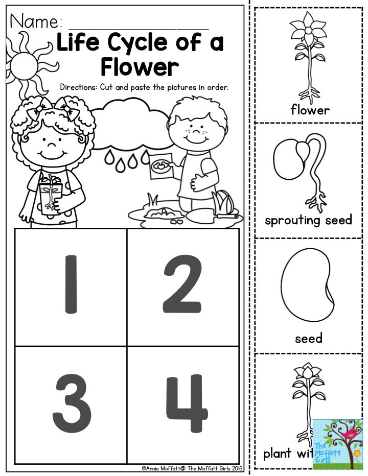 Plant Cycle Worksheet Photos Leafsea Plant Life Cycle Worksheets