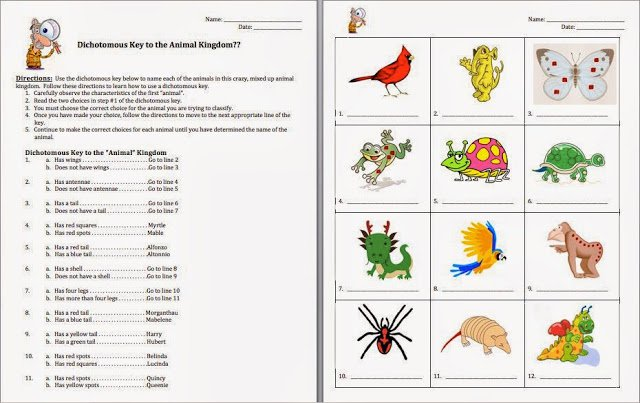 Plant Dichotomous Key Worksheet Worksheets For All