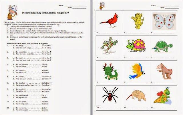 plant dichotomous key worksheet worksheets for all free worksheets samples. Black Bedroom Furniture Sets. Home Design Ideas