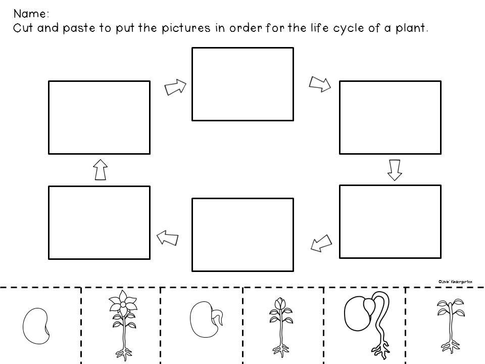 Plant Life Cycle Worksheets For Kindergarten Life Cycle Of A Plant