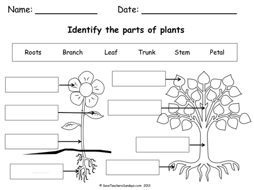 Plant Parts Worksheet Plant Clipart Labels Its Part Pencil And In