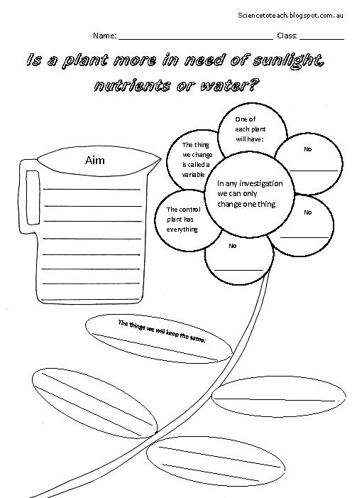 Plant Worksheets For Third Grade Worksheets For All