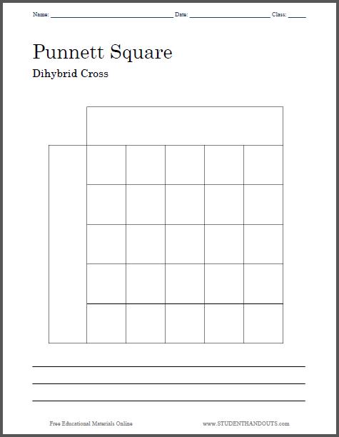 Punnett Square Dihybrid Cross Worksheet