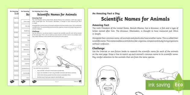 Scientific Names For Animals Worksheet   Activity Sheet