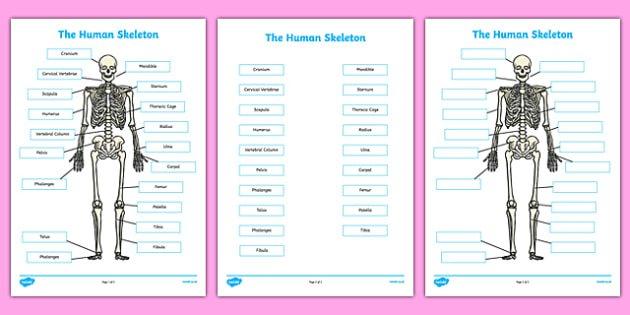 Skeleton Labelling Sheets Scientific Names