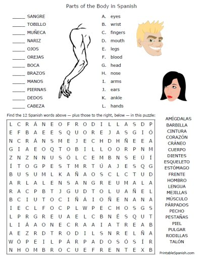 Spanish Parts Of The Body Worksheet Worksheets For All
