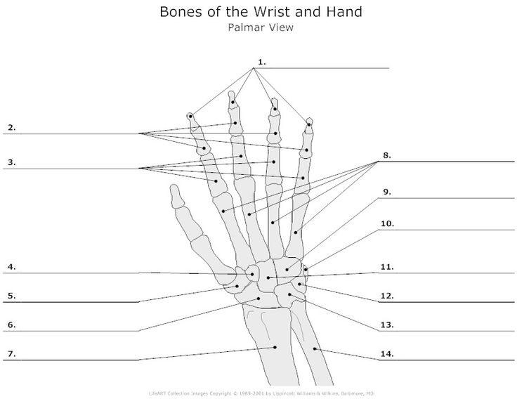 Hand Diagram To Label Complete Wiring Diagrams
